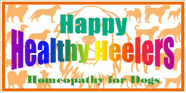 Happy Healthy Heelers